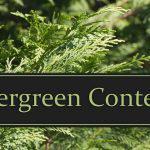 Contenidos evergreen, qué son y cómo crearlos