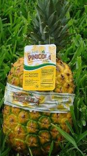 pinicola