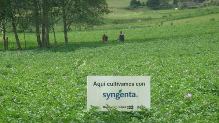 Aqui cultivamos con Syngenta